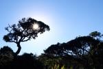 Horton Plains Sunrise